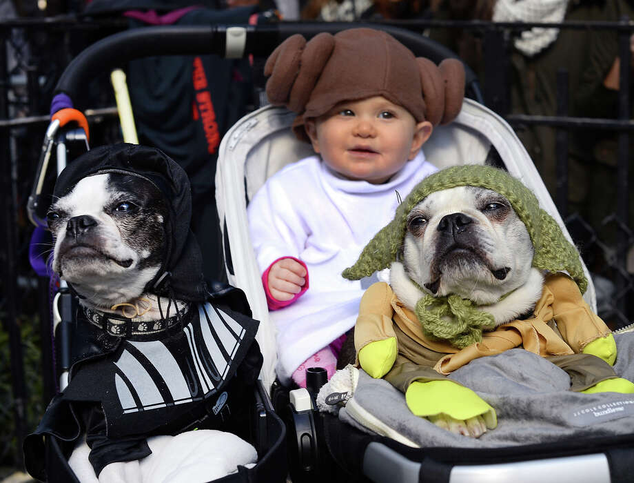 "Dogs and baby dressed as characters from ""Star Wars"" attend the 23rd Annual Tompkins Square Halloween Dog Parade on October 26, 2013 in New York City. Thousands of spectators gather in Tompkins Square Park to watch hundreds of masquerading dogs in the country's largest Halloween Dog Parade. Photo: TIMOTHY CLARY, AFP/Getty Images / 2013 AFP"