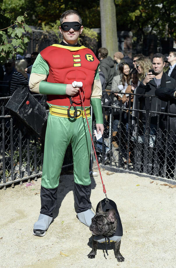 Dog and owner dressed as Batman and Robin participate in the 23rd Annual Tompkins Square Halloween Dog Parade on October 26, 2013 in New York City. Thousands of spectators gather in Tompkins Square Park to watch hundreds of masquerading dogs in the country's largest Halloween Dog Parade. Photo: TIMOTHY CLARY, AFP/Getty Images / 2013 AFP
