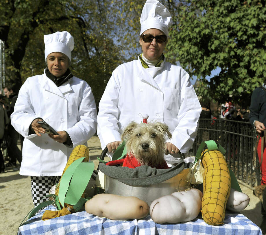 Contestants dressed up with their dog participate in the 23rd Annual Tompkins Square Halloween Dog Parade on October 26, 2013 in New York City. Thousands of spectators gather in Tompkins Square Park to watch hundreds of masquerading dogs in the country's largest Halloween Dog Parade. Photo: TIMOTHY CLARY, AFP/Getty Images / 2013 AFP