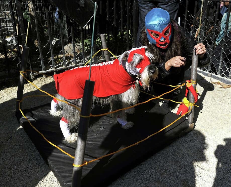 A dog and owner in costume participate in the 23rd Annual Tompkins Square Halloween Dog Parade on October 26, 2013 in New York City. Thousands of spectators gather in Tompkins Square Park to watch hundreds of masquerading dogs in the country's largest Halloween Dog Parade. Photo: TIMOTHY CLARY, AFP/Getty Images / 2013 AFP