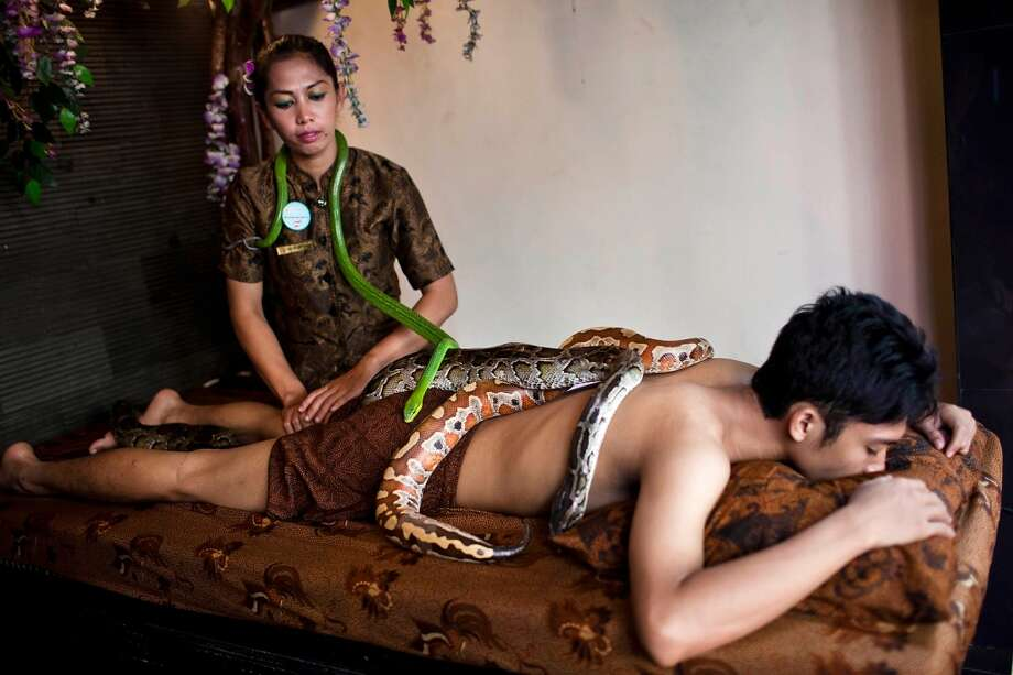 Members of staff demonstrate a form of massage using pythons at Bali Heritage Reflexology and Spa on October 27, 2013 in Jakarta, Indonesia. The snake spa offers a unique massage treatment which involves having several pythons placed on the customers body. The movement of the snakes and the adrenaline triggered by fear is said to have a positive impact on the customers metabolism. Photo: Getty Images