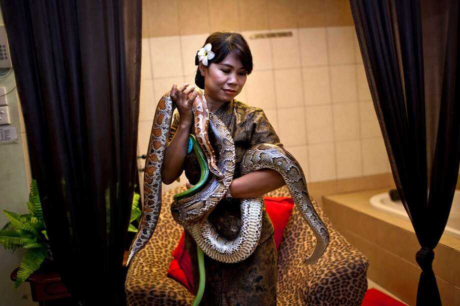 A member of staff holds pythons used in massage treatments at Bali Heritage Reflexology and Spa on October 27, 2013 in Jakarta, Indonesia. The snake spa offers a unique massage treatment which involves having several pythons placed on the customers body. The movement of the snakes and the adrenaline triggered by fear is said to have a positive impact on the customers metabolism. Photo: Getty Images