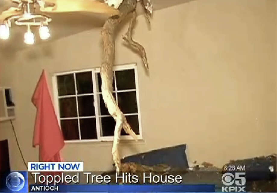 A windy storm brought down trees and power lines across the Bay Area overnight including a tree into a house in Antioch. Photo: CBS San Francisco
