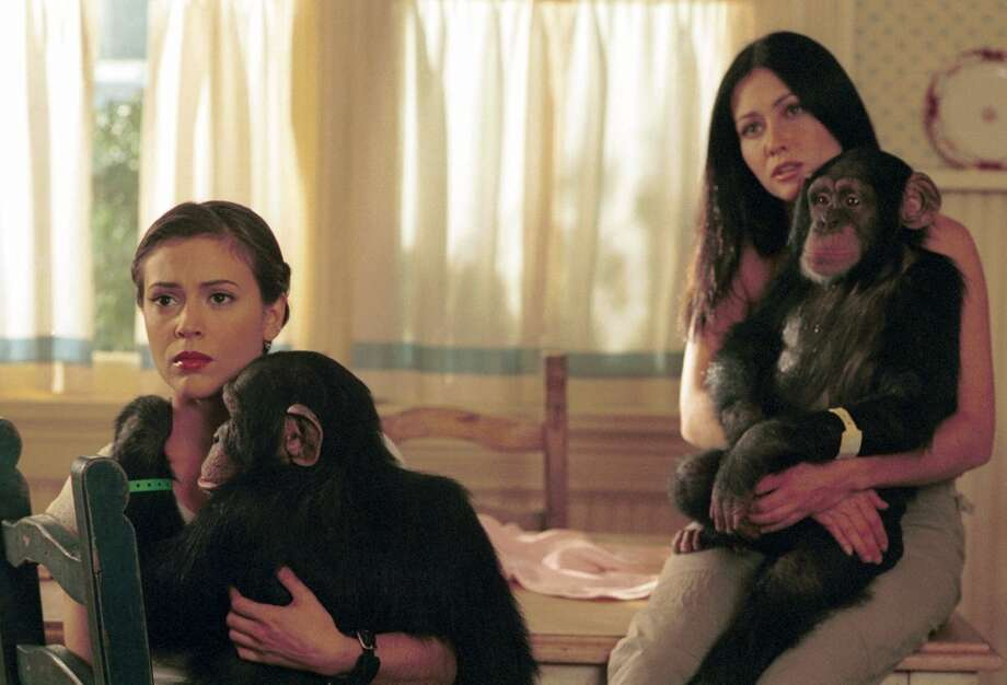 """In an episode of """"Charmed,"""" the Halliwell sisters rescue chimpanzees from a deranged doctor who has been experimenting with the blood of The Charmed Ones, giving the animals magical powers. Photo: THE WB/RICHARD CARTWRIGHT, TLP"""