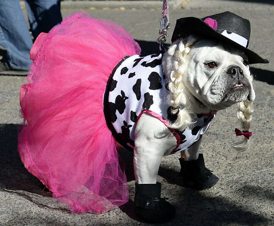 The tutu is bad enough, but did you have to make me a Dalmatian?! (Ballerina, Tompkins Square Halloween Dog Parade in New York City.) Photo: Timothy A. Clary, AFP/Getty Images