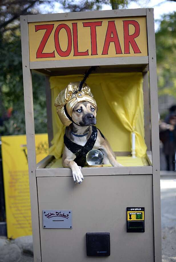 In the original script of the movie 'Big,'a slightly different Zoltar fortune-telling machine grants Tom Hanks' wish, turning him into a Great Dane. (Tompkins Square Halloween Dog Parade in New York City.) Photo: Timothy A. Clary, AFP/Getty Images