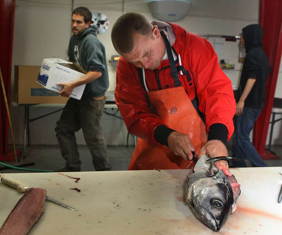 Fish advocate and owner Kenny Belov (front) of TwoXSea cuts a local Albacore. Photo: Liz Hafalia, The Chronicle