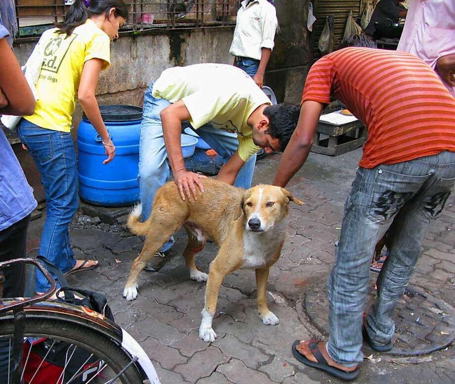 Volunteers with Welfare of Stray Dogs provide care in Mumbai, India. Photo: Courtesy Gail Pail