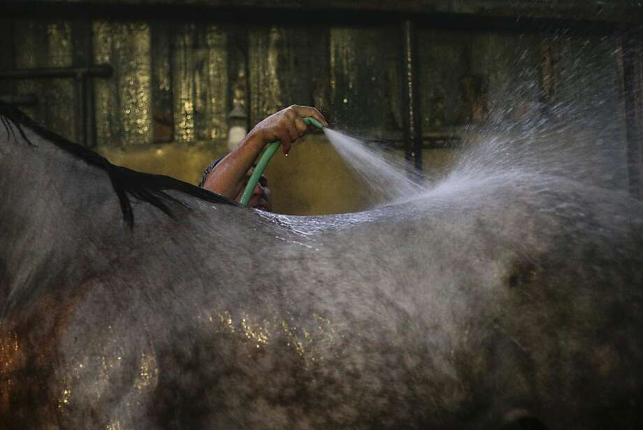 A worker bathes a horse after a training session for Saturday's Breeders' Cup at Santa Anita Park on Monday, Oct. 28, 2013, in Arcadia, Calif. (AP Photo/Jae C. Hong) Photo: Jae C. Hong, Associated Press
