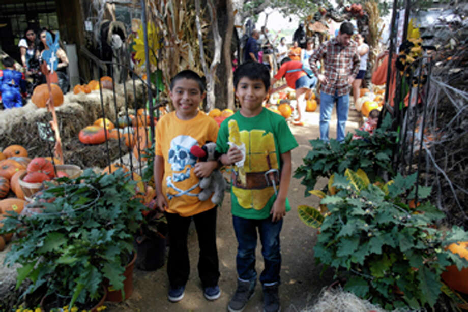 2013 Milbergers Halloween Photo: San Antonio Express-News