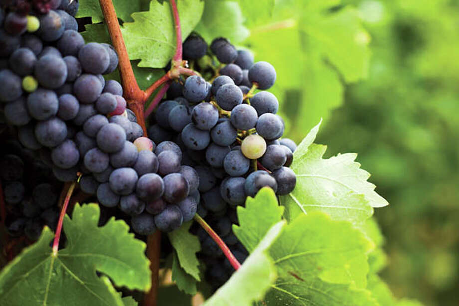 600The average number of grapes it takes to make a bottle of wine.  Source: tinyurl.com/hl13grapes  Photo: Melhi, Getty Images / (c) melhi