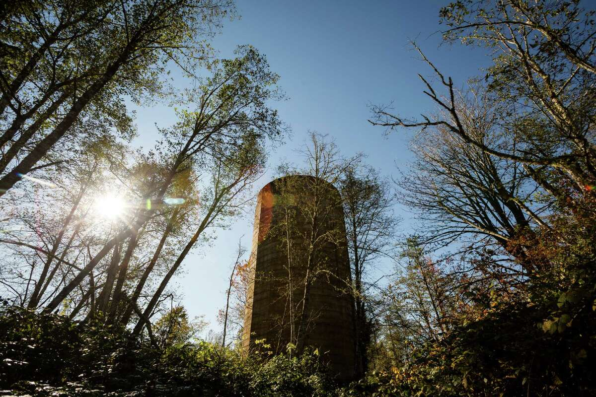 Largely overgrown, the old mill's decaying burn tower serves as an eerie monolith in the woods Monday, Oct. 28, 2013, in Selleck.