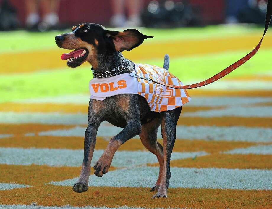 The Tennessee Volunteers mascot Smokey looks playful and sweet. Photo: Scott Cunningham, Getty Images / 2013 Getty Images
