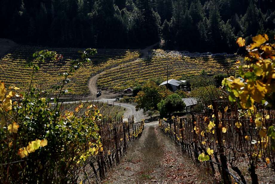 In far western Sonoma County, Porter-Bass Vineyard sits between two ridge tops in a loop of the Russian River. Photo: Preston Gannaway, Special To The Chronicle