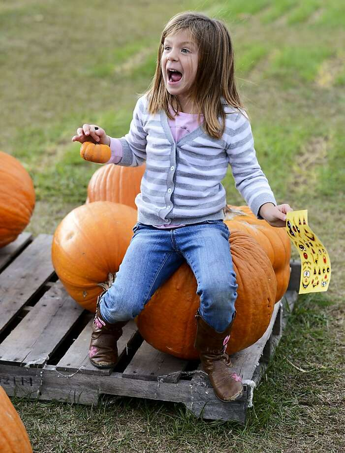 Ye-OW! Addison Whitt was helping her brother and mother pick out a pumpkin for Halloween in Decatur, Ala., when she abruptly sat down on a gourd. Apparently she forgot that pumpkins have stems. Photo: John Godbey, Associated Press
