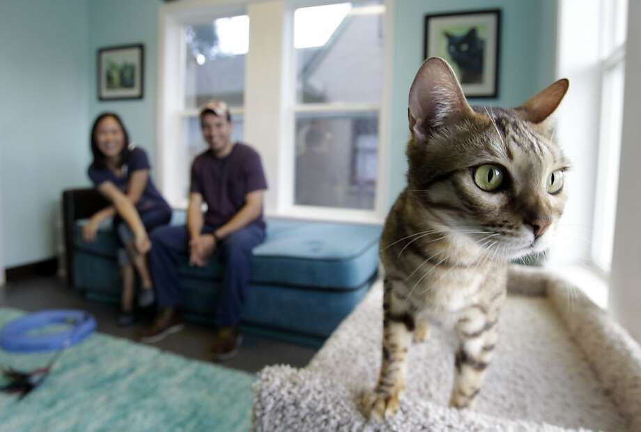 It's National Cat Day, so do a kitty a favorand adopt him or her from a rescue center, SPCA or Humane Society. Nhi Hoang and Emilio Carmona look like they might be taking home Valentino, a handsome Bengal at Save-a-Cat Rescue in Houston. Photo: Melissa Phillip, Houston Chronicle