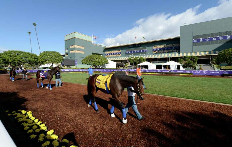 Travers Stakes runner-up and Breeders' Cup Classic entrant Moreno schools in the paddock at Santa Anita Race Track Oct. 29, 2013.   With the Breeders' Cup Classic race just around the corner on Saturday at the track in Arcadia, California Moreno gets the used to his surroundings.    (Skip Dickstein/Times Union Photo: SKIP DICKSTEIN