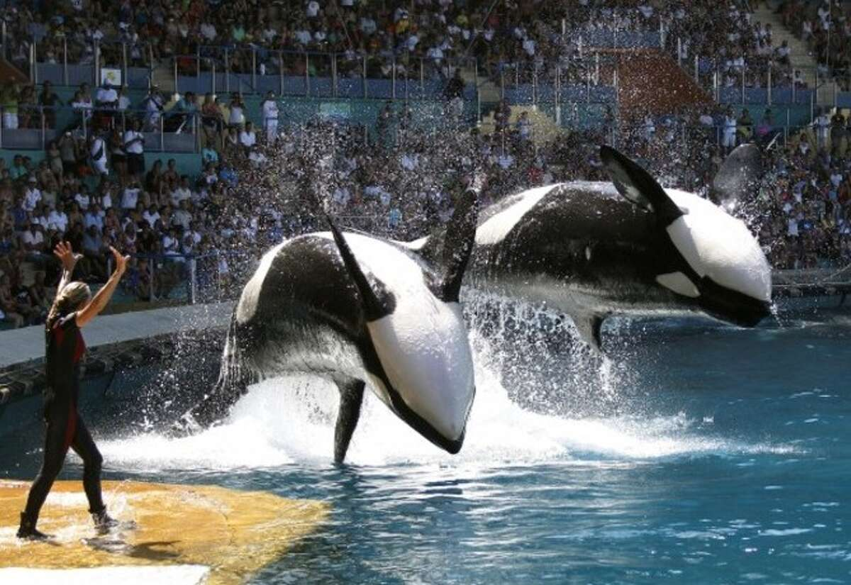 'Blackfish' (2013)Director: Gabriela CowperthwaiteEarnings: $2.2 millionConsider your childhood memories of SeaWorld ruined. This documentary undercovers what happens to whales in captivity and specifically focuses on Tilikum, an orca who was involved in the death of three people.
