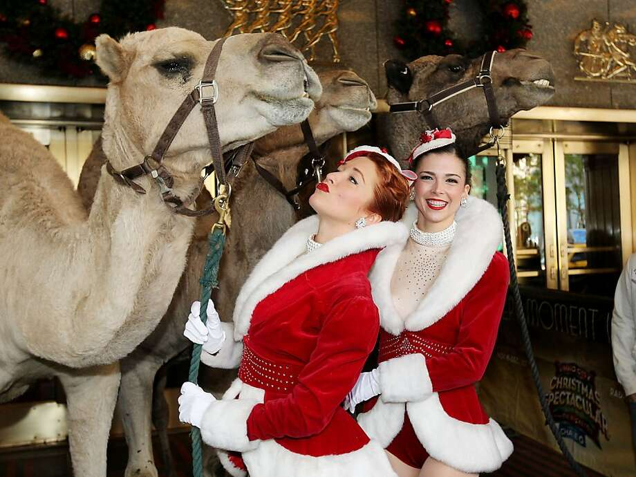 "This image released by Starpix shows camels with Rockettes Jessica Osbourne, left, and Sierra Ring at Radio City Music Hall for the first day of rehearsals for the 2013 Radio City Christmas Spectacular, Tuesday, Oct. 29, 2013 in New York. The animals will be a part of the ""Living Nativity"" scene. The annual Christmas show starts on Nov. 8. (AP Photo/Starpix, Amanda Schwab) Photo: Amanda Schwab, Associated Press"