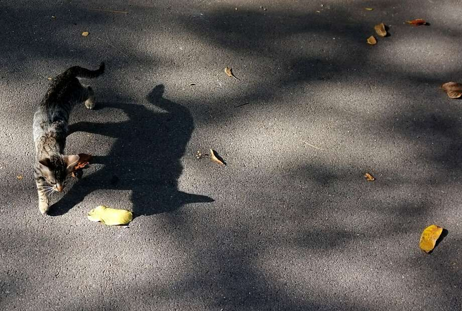 With a slight breeze,a leaf on a Belgrade pavement can be a source of endless amusement. Photo: Darko Vojinovic, Associated Press