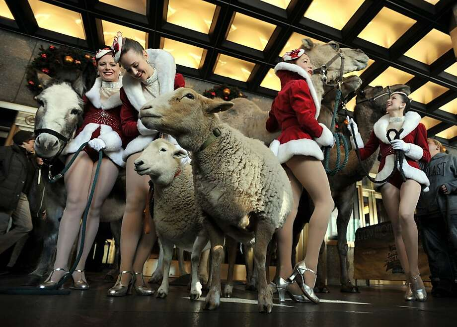 "Lamb and legs: The stars of the annual ""Radio City Christmas Spectacular's"" Living Nativity show take a break from rehearsals outside the hall in New York. Photo: Stan Honda, AFP/Getty Images"