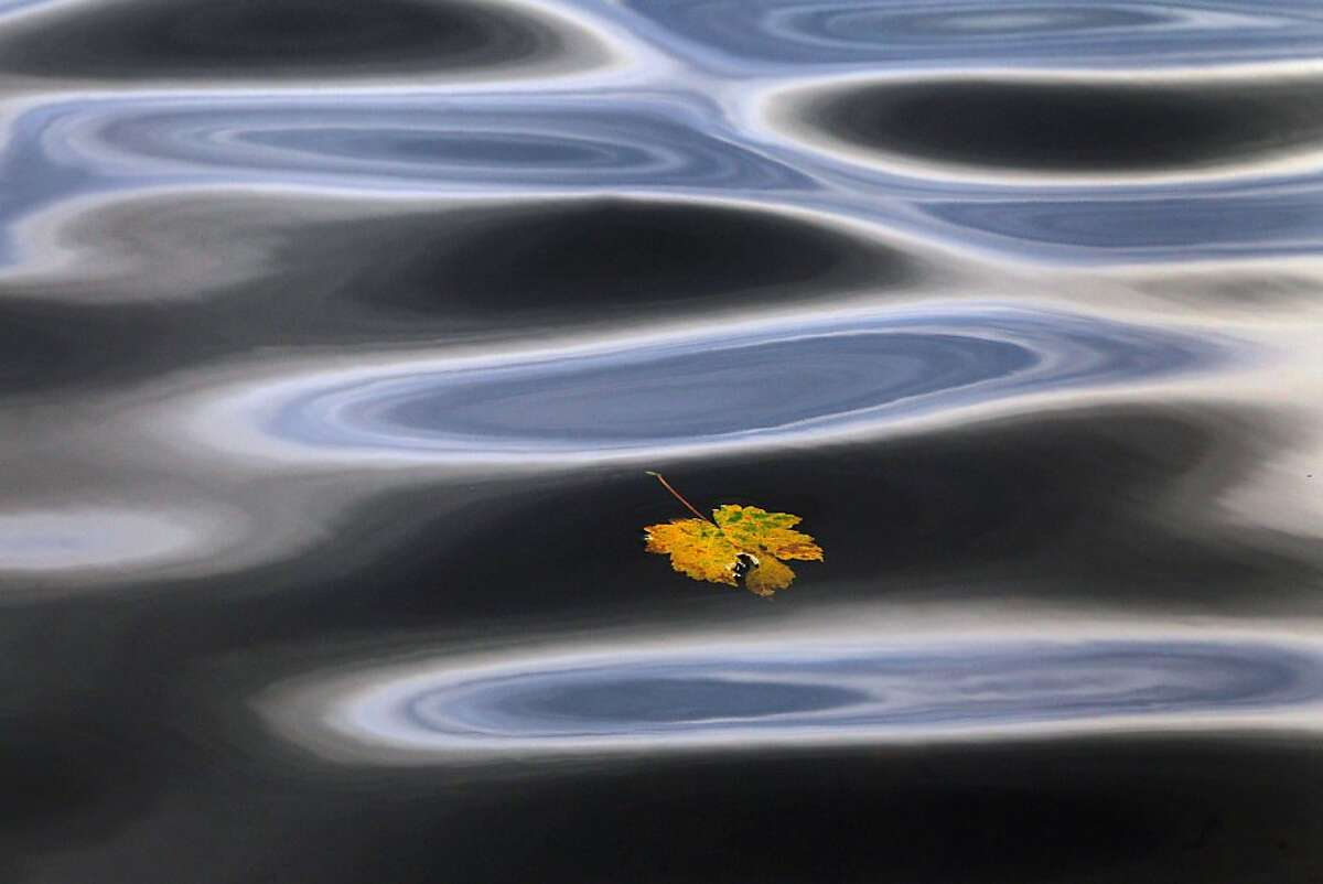 An autumn leaf floats on the dark waters of a swamp on the Elbsee Lake near Aitrang,Germany, on October 29, 2013. AFP Photo /DPA/ KARL-JOSEF HILDENBRAND /GERMANY OUTKARL-JOSEF HILDENBRAND/AFP/Getty Images