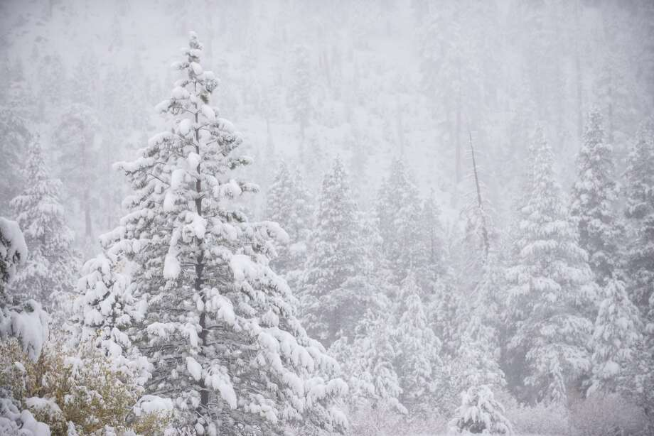 Snow falling on conifers at Squaw. Photo: Matt Palmer, Courtesy