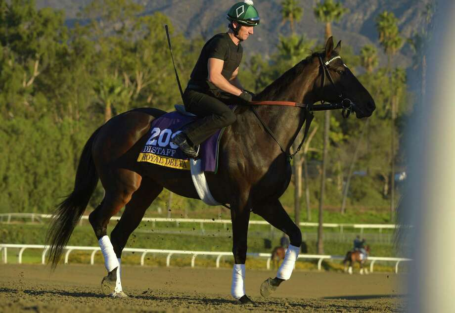 Royal Delta is looking to become the second three-time winner in a race in the 30-year history of the Breeders' Cup in Saturday's Distaff event. She won by 11/2 lengths last year. Photo: Mark J. Terrill / Associated Press