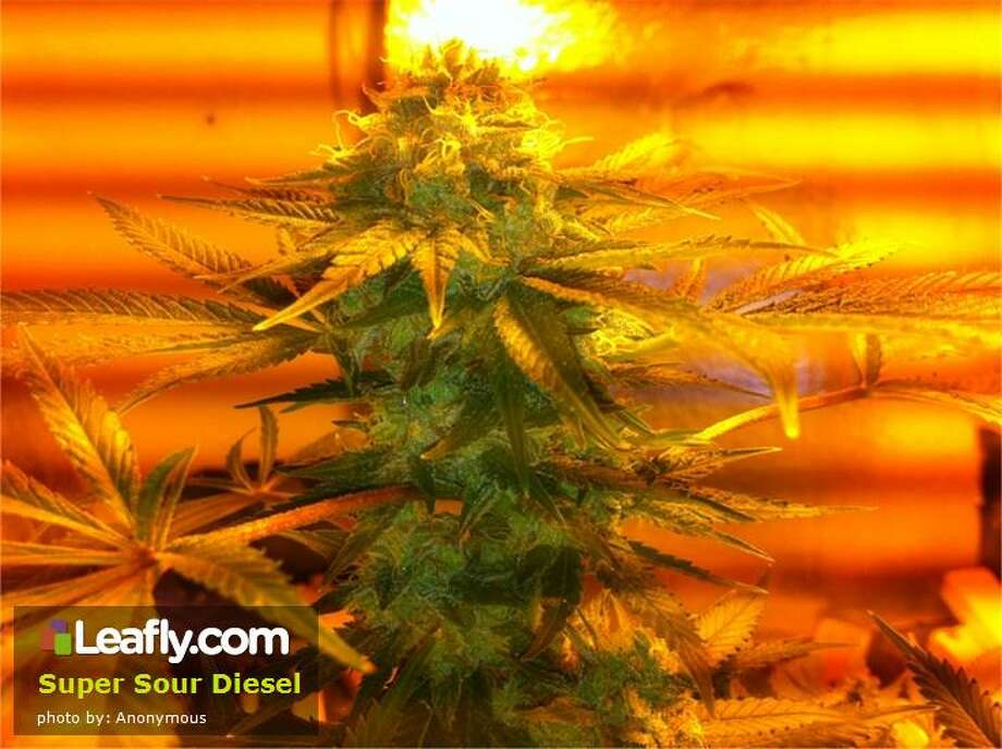 Super Sour Diesel Cannabis Strain:   Here's  how Leafly.com describes the effects of this strain, based on user submissions: Taking after its popular parents, Super Sour Diesel is one incredible sativa. A potent cross between Super Silver Haze and Sour Diesel, Super Sour Diesel knocks out stress and pain while fostering creativity and euphoria. In true sativa form, Super Sour Diesel energizes, making it great for daytime use. New users, however, should use caution when trying this strain. Super Sour Diesel produces strong cerebral effects, which may be overpowering to novice MMJ patients. Familiar users will be surprised at this strain's introspective spark. Sociable and fun, the effects of this strain are felt upon first taste. Super Sour Diesel's pungent, fuel-like aroma speaks to the sheer strength of this strain.