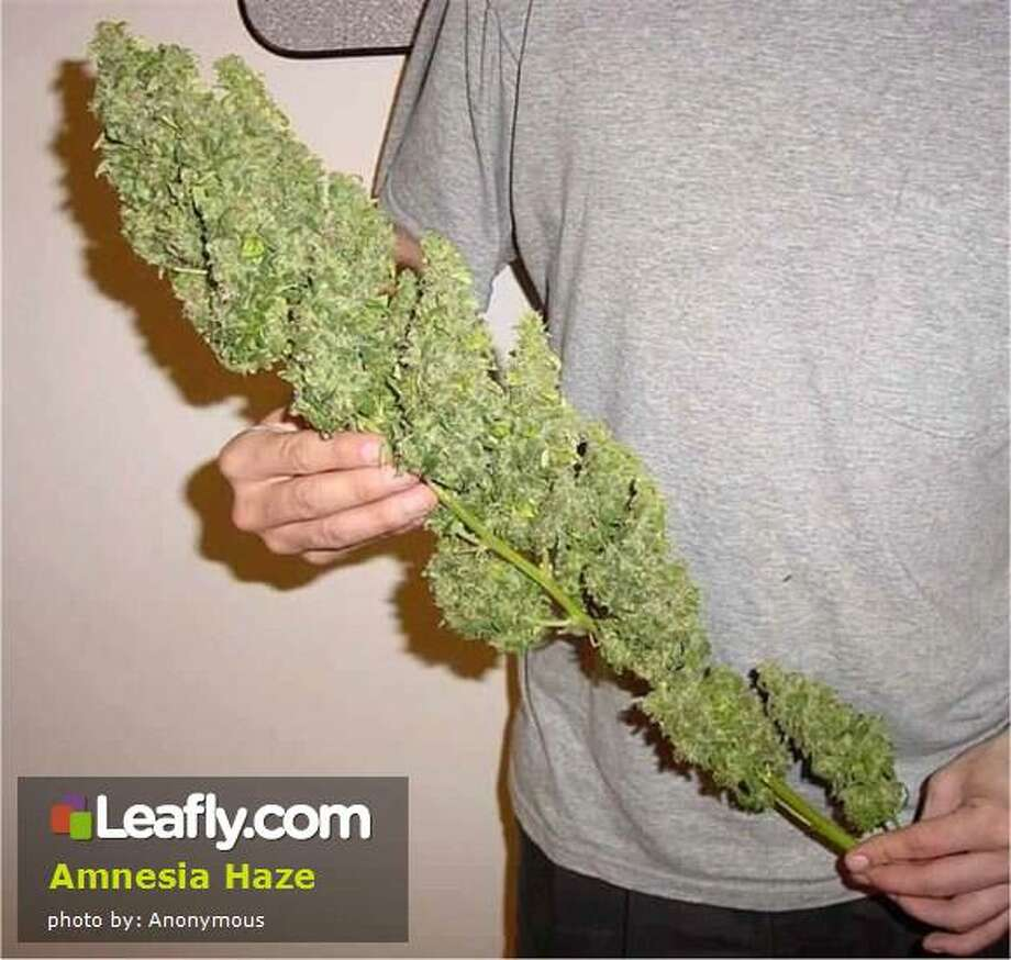 Amnesia Haze Cannabis Strain:   Here's  how Leafly.com describes the effects of this strain, based on user submissions: A mostly sativa hybrid, Amnesia Haze won first prize at the Hightimes Cannabis Cup in '04.  Sativa looks, aroma, and high.