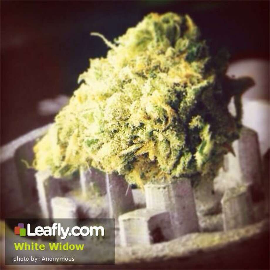 White Widow Cannabis Strain:   Here's  how Leafly.com describes the effects of this strain, based on user submissions: White Widow buds are covered in crystals, giving it an almost sugared look.  A relatively new strain developed in the early 1990's it has been the subject of many rap songs and is frequently mentioned in the television show Weeds.  It is a very potent and powerful variety of cannabis, available on the top of all Dutch coffee shop menus.  The buzz is powerful and energetic yet social, be prepared for a strong high.  You will not be disappointed with White Widow.