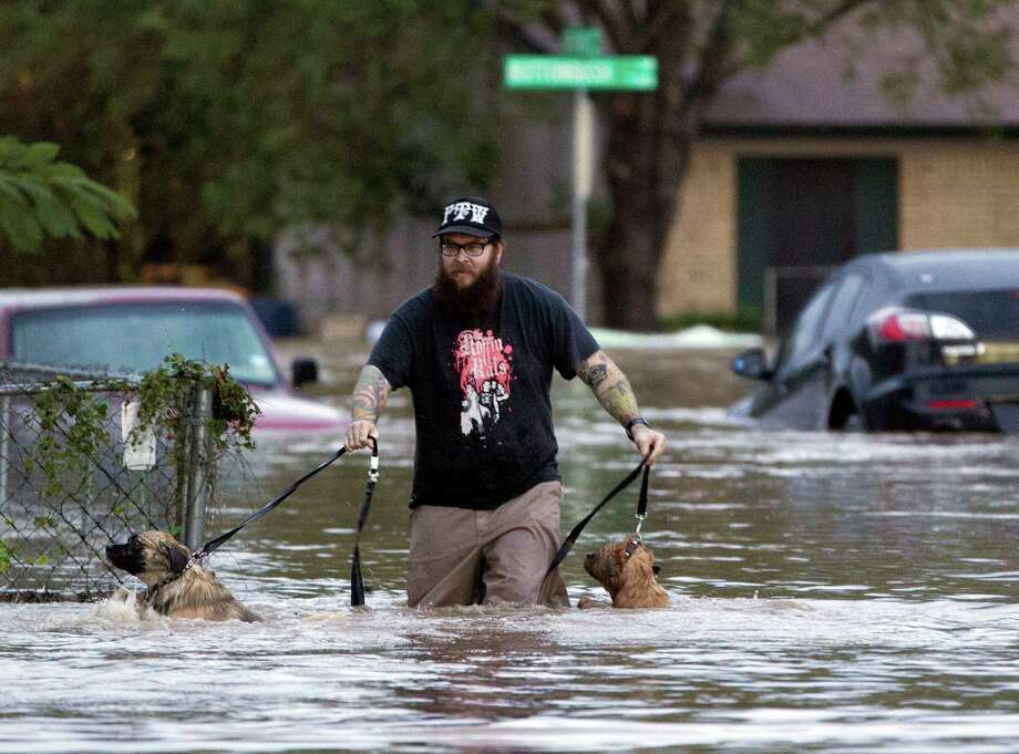 A man walks with two dogs through floodwaters on Quicksilver Boulevard in Austin, Texas, on Thursday, Oct. 31, 2013, after heavy overnight rains brought flooding to the area. The National Weather Service said more than a foot of rain fell in Central Texas, including up to 14 inches in nearby Wimberley, since rainstorms began Wednesday. Photo: Deborah Cannon, STATESMAN.COM / STATESMAN.COM