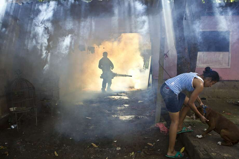 A worker from the Nicaraguan health ministry fumigates a resident's front yard in Managua, Nicaragua, Thursday, Oct. 31, 2013. According to the government, more than 5,000 cases of dengue have been reported this year and has claimed 14 lives. (AP Photo/Esteban Felix) Photo: Esteban Felix, Associated Press