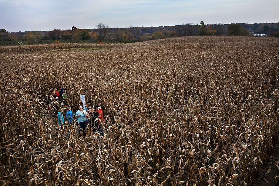 In this Oct. 30, 2013 photo, a group of Milford girls celebrating Sydney Pattinson's 10th birthday glance around, deciding which way to go in the corn maze at Spicer's Orchard. (AP Photo/The Flint Journal, Zack Wittman) LOCAL TV OUT; LOCAL INTERNET OUT; ONLN OUT; IONLN OUT Photo: Zack Wittman, Associated Press