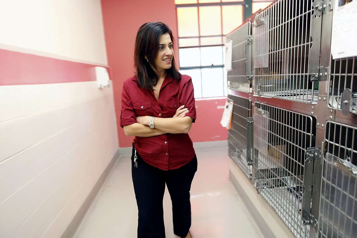 Shelter director Rebecca Katz walks through an room with cats in pens that are on hold before they can be put up for adoption, at the San Francisco Animal Shelter in San Francisco, CA Thursday, October 31, 2013.