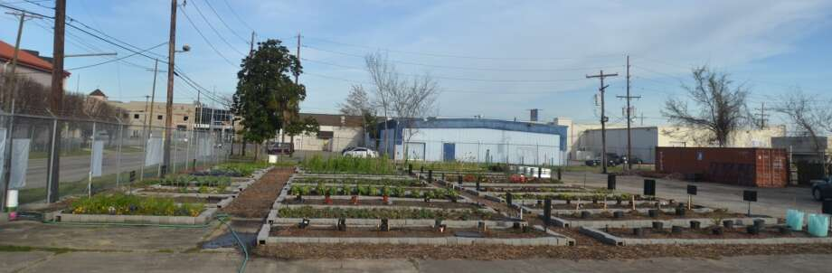 The Giving Field community garden on Liberty Street has donated more than 950 lbs. of produce to local homeless shelters and soup kitchens since Oct. 2012. Photo: Cat5