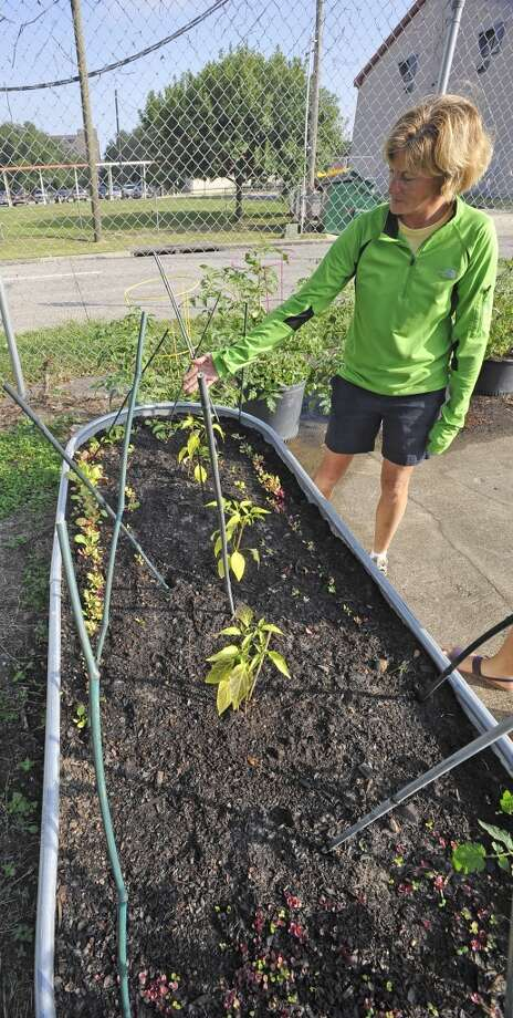 Mary Mahlie, Co-Chairwoman of the Giving Field on Liberty Street, looks over a batch of small herb plants that will be re-planted Saturday that have been started in this tub.. On land owned by St. Anne Catholic Church in Beaumont, the first dig in the new community Giving Field, will be Saturday October 13, 2012. The new garden will provide vegetables and fruit to Some Other Place in Beaumont and The Hospitality Center in Port Arthur as well as other members of the community in need of fresh produce. It will also include a labrynth for meditation and a chicken coop to produce fresh eggs in future phases of development. Dave Ryan/The Enterprise Photo: Dave Ryan/The Enterprise