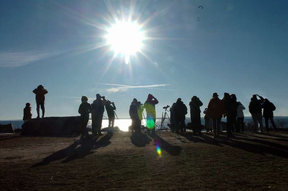 The first Sunday bird walk at Greenwich Point. Helen Neafsey/Staff photo Photo: TBA, GT