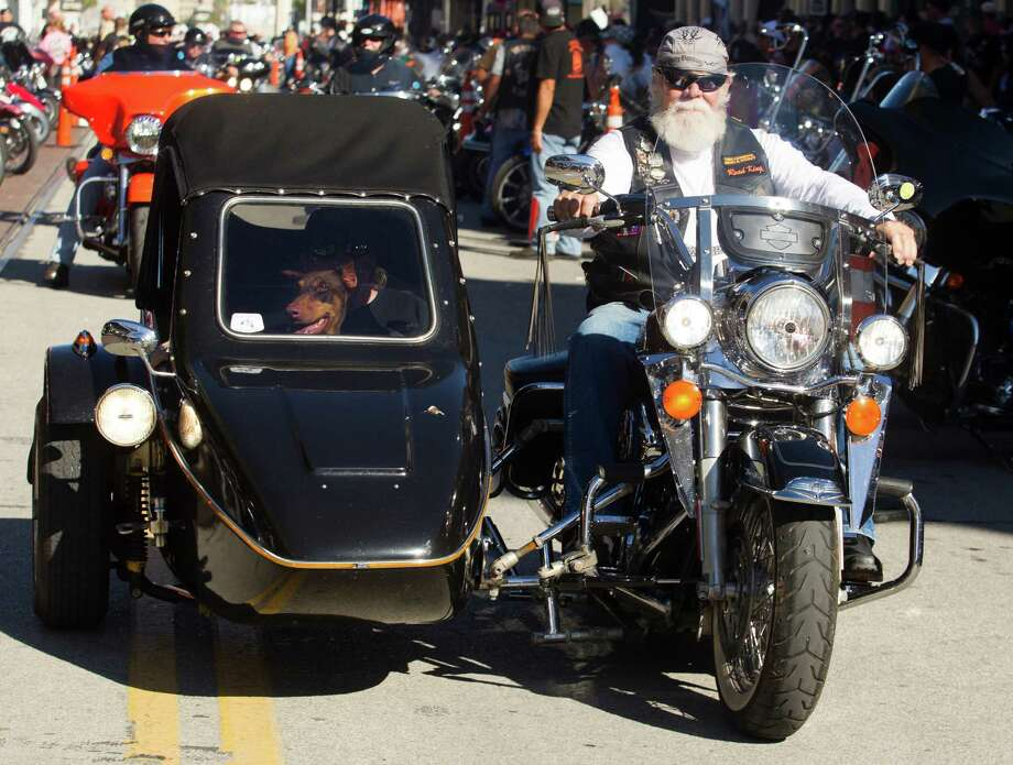 Sky Starnes doberman Rayne rides along the Strand during the 2013 Lone Star Rally on Friday, Nov. 1, 2013, in Galveston. Photo: J. Patric Schneider, For The Chronicle / © 2013 Houston Chronicle