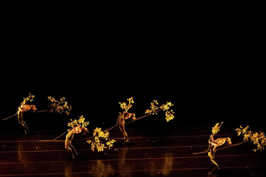 "Dance-illusionists MOMIX perform a variety of pieces from ""Botanica,"" a series celebrating the wonders of nature Friday, Nov. 1, 2013, in the Meany Hall for the Performing Arts on the University of Washington campus in Seattle. The show, put on by the UW World Series, runs through Saturday. Photo: JORDAN STEAD, SEATTLEPI.COM / SEATTLEPI.COM"