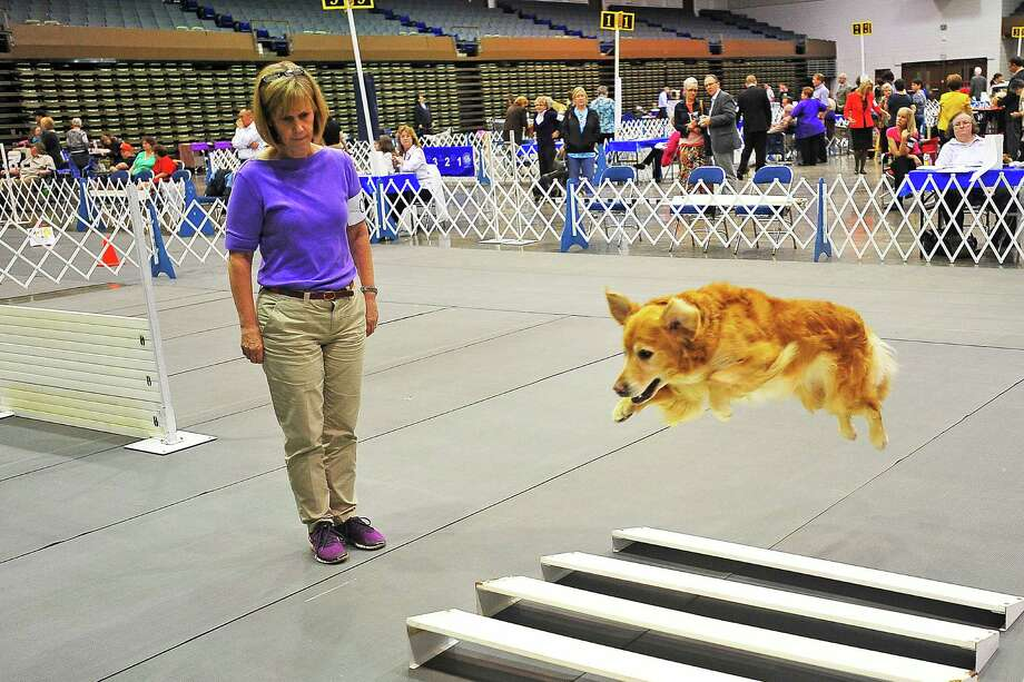 Were you SEEN at the Beaumont Kennel Club Dog Show on Saturday, Nov. 2? Michael Rivera/The Enterprise