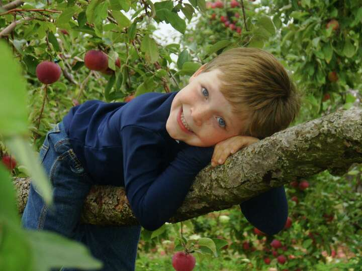 Leah Hoey's son Max hangs out on a tree limb at Bowmans Orchard in Rexford.