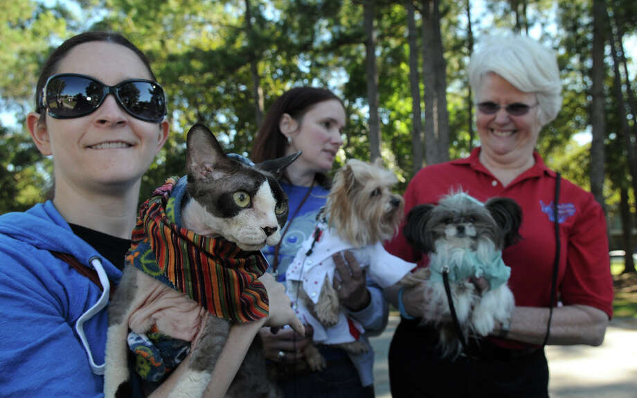 """Simon"", left, a nine-year old Devon Rex bread, held by his owner, Paula Seiver, of Kingwood, checks out his canine competition during the Kingwood Barkfest Costume Contest in Kingwood Town Center on Saturday. ""Simon"" was the only feline entered in the competiton. Photo: Jerry Baker, For The Chronicle"