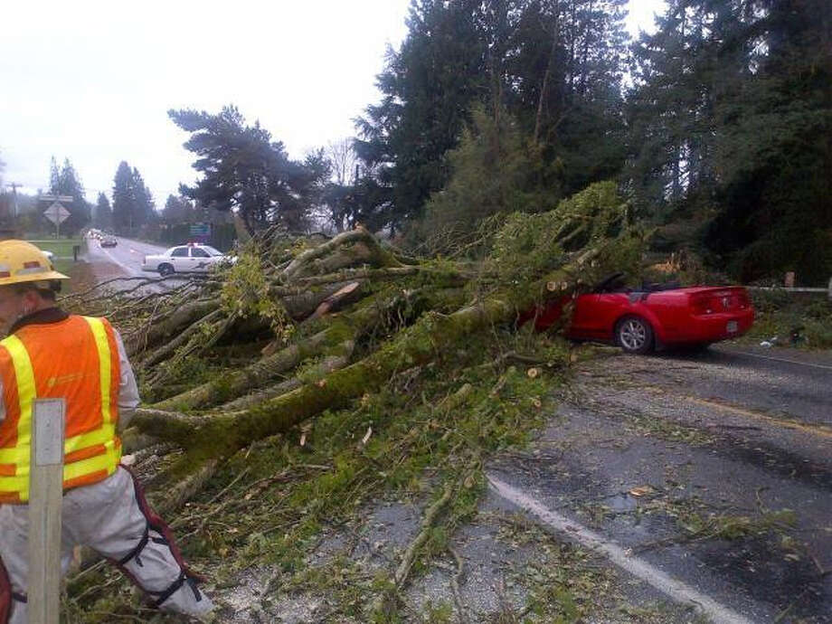 Tree topples across Mustang on SR-203 near Monroe, seriously injuring the 48-year-old driver. (Photo courtesy: Trooper Mark Francis, Washington State Patrol)