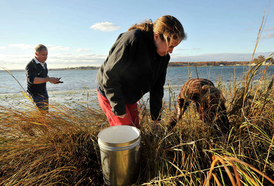 Roger Bowgen, left, chairman of the Shellfish Commission, helps Caroline Alfen, center, and her mother, Meghan, find oysters during Oyster Fishing Family Day at Greenwich Point Park in Greenwich, Conn., on Sunday, Nov. 3, 2013. Photo: Jason Rearick / Stamford Advocate