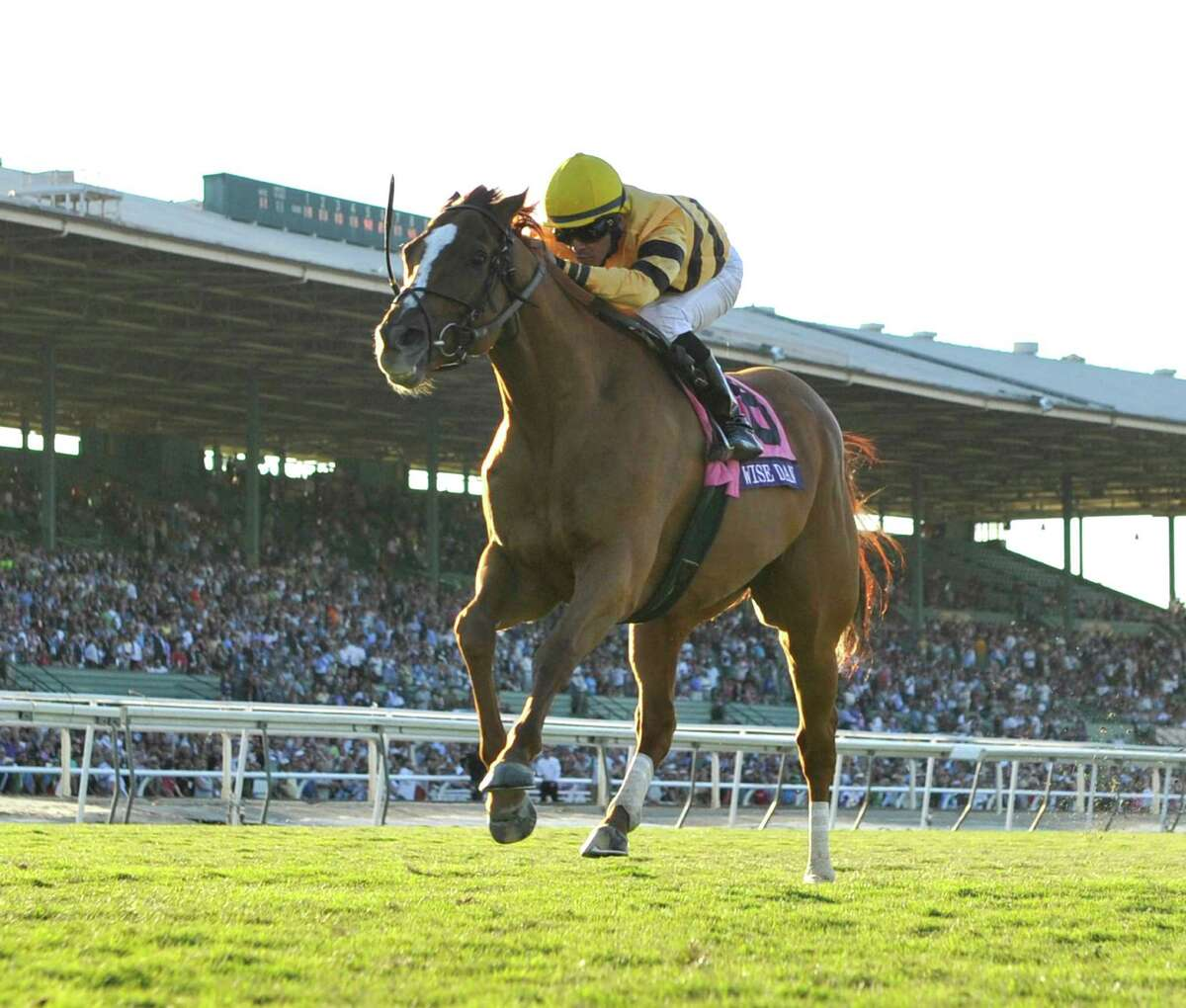Jose Lezcano guides Wise Dan to a second consecutive win in the to win the 30th running of The Breeders' Cup Mile Nov. 2, 2013 at Santa Anita Park in Arcadia, California. (Skip Dickstein/Times Union