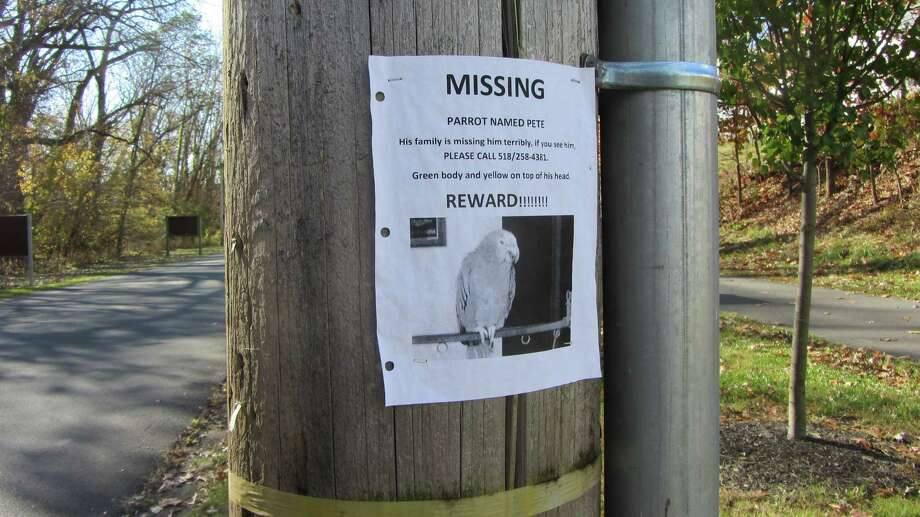 A new poster for Pete the parrot is seen on Peebles Island in Cohoes. (Bob Gardinier/Times Union)