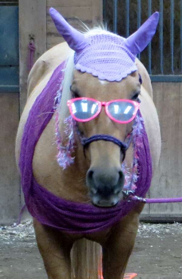 """Taffy gets all dressed up for Halloween as Grandma Taffy with her crocheted cap, her shawl and her eyeglasses for a costume parade for Renegade Farm horses, where Carol Ryan of Niskayuna boards her. """"Taffy seemed very content to be dressed as the grandmother from Little Red Riding Hood with her crocheted bonnet and shawl,"""" Ryan says. """"She especially liked the glasses."""" (Carol Ryan)"""