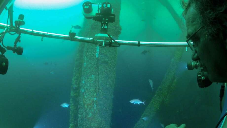 Coral expert Paul W. Sammarco of the Louisiana Universities Marine Consortium observes fish swimming among the steel legs of an old Black Elk Energy platform.