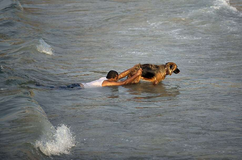 But I'd rather just fetch balls:On a beach in Gaza City, Palestinian Hassan Kasskin teaches his dog how to rescue 